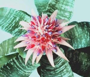 Агава – растение, которое любит солнце