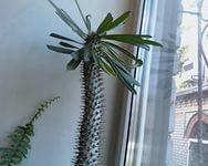 Длинный кактус