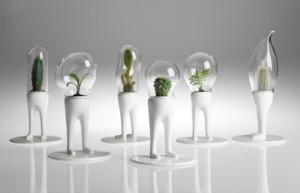 Индивидуальность кактусов