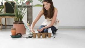 Как правильно подкармливать кактусы