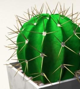Периодичность жизненного цикла кактусов