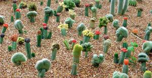 Питание кактусов
