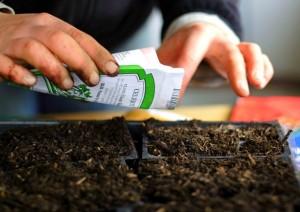 Семена кактусов требуют обеззараживания