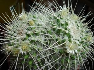Сортировка колючек кактусов