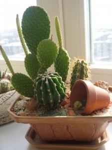 Зимнее содержание кактусов