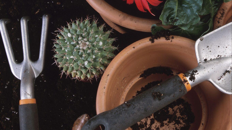 Полезные советы по уходу за кактусами