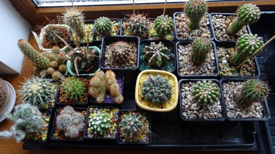 Выбор кактусов для коллекции