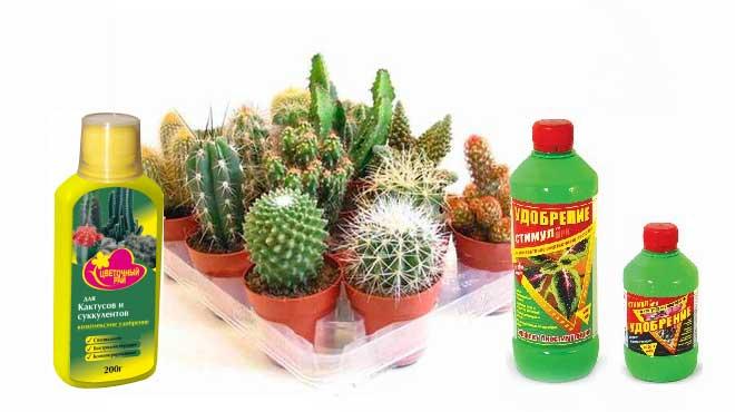 Подкормки кактусов