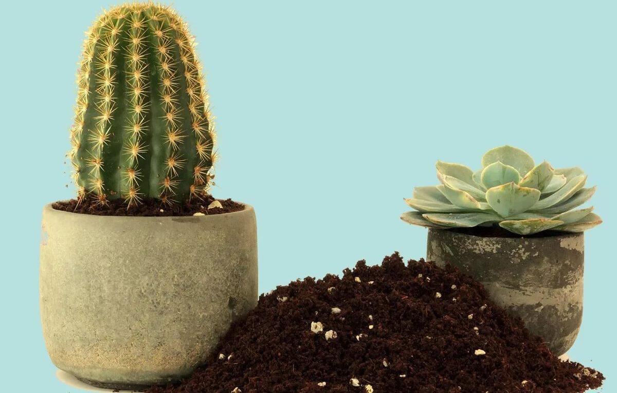 Как правильно выбрать почву для кактусов
