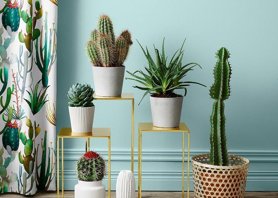 Место для кактусов в квартире. Как выбрать?