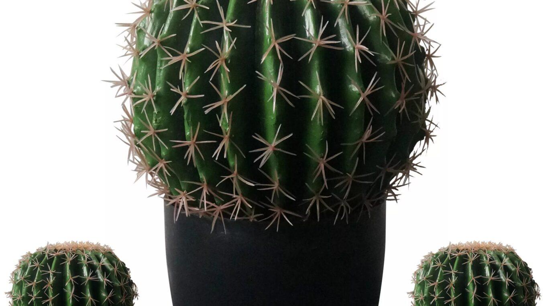 Сдерживание роста кактуса размерами горшка