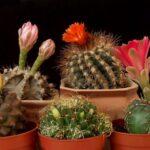 Уход за кактусами. 3 главных шага