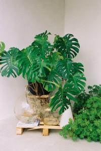 Какими должны быть комнатные растения для детской комнаты