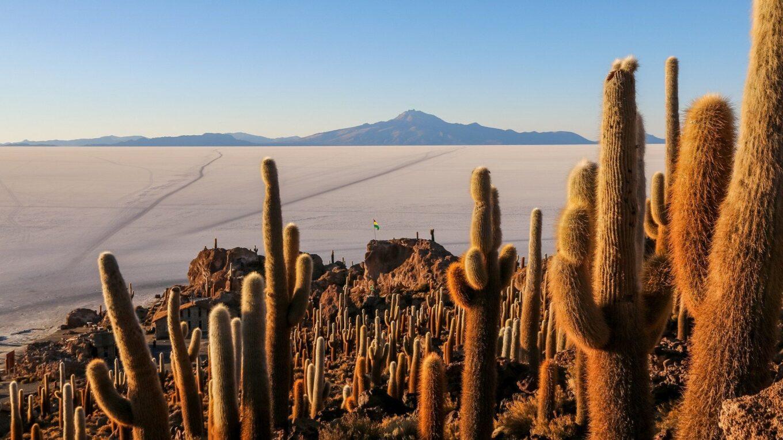 Кактусы Боливии