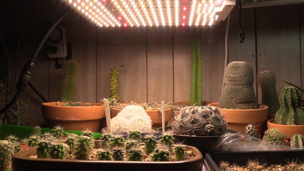 Правильное освещение для кактуса