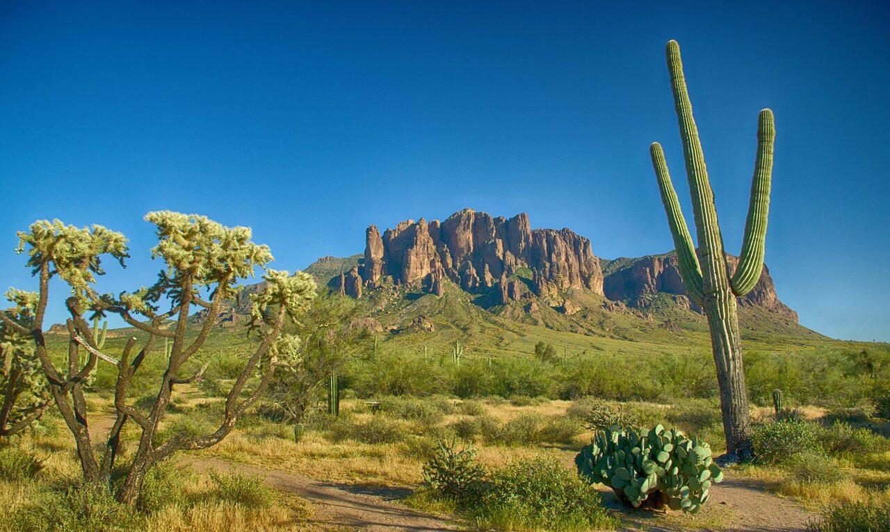 Кактусы Нью-Мексико
