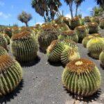 Род кактусов - Мелокактус. Описание видов с фото и видео
