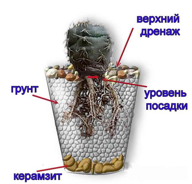 Схема дренажа кактуса