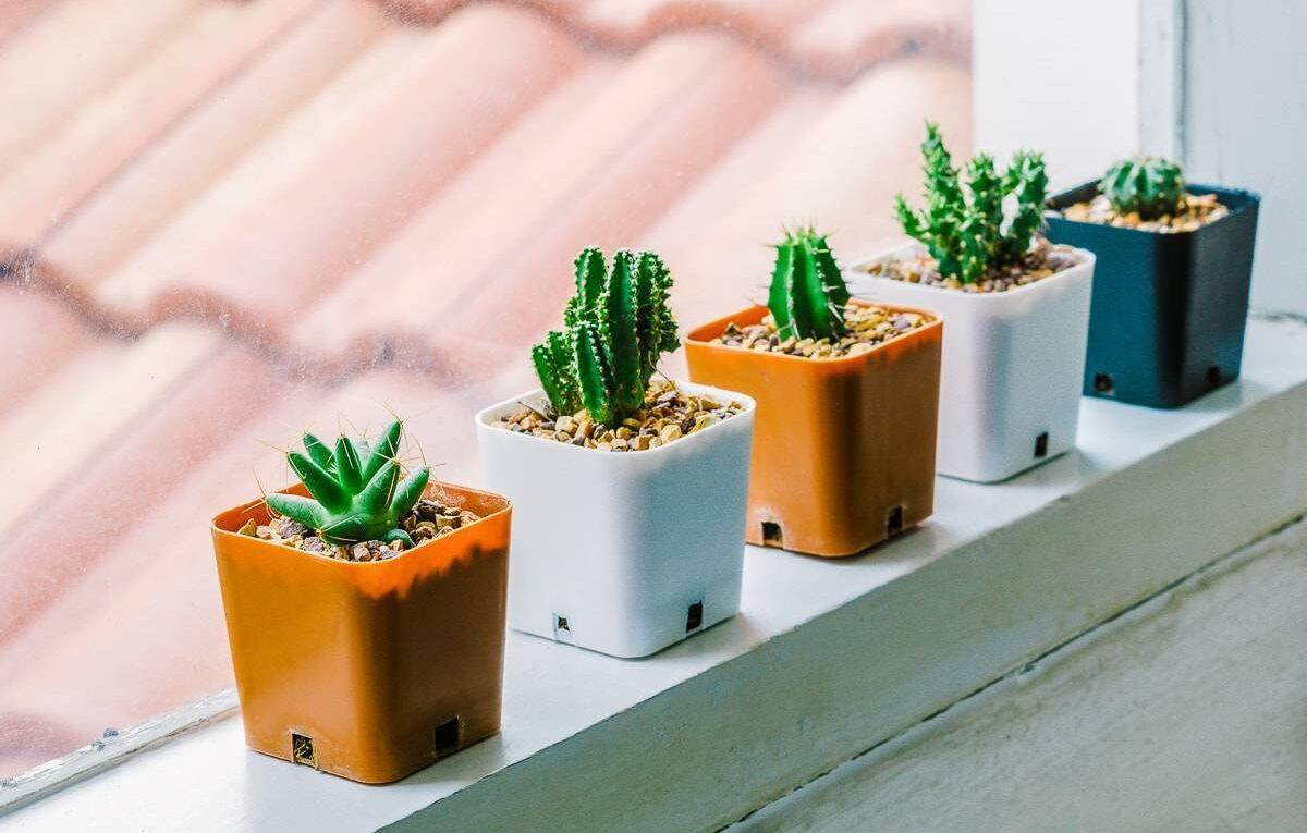 Выбираем емкость для кактуса