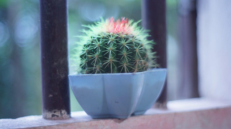 Значение воды для кактусов