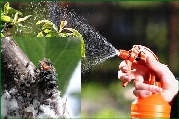 Химические средства для борьбы с вредителями кактусов