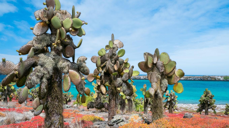 Кактусы Эквадора