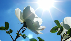 Свет и солнце