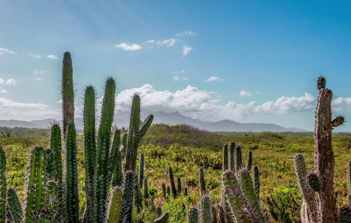 Кактусы Юга Бразилии
