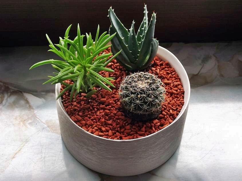Субстрат для кактусов