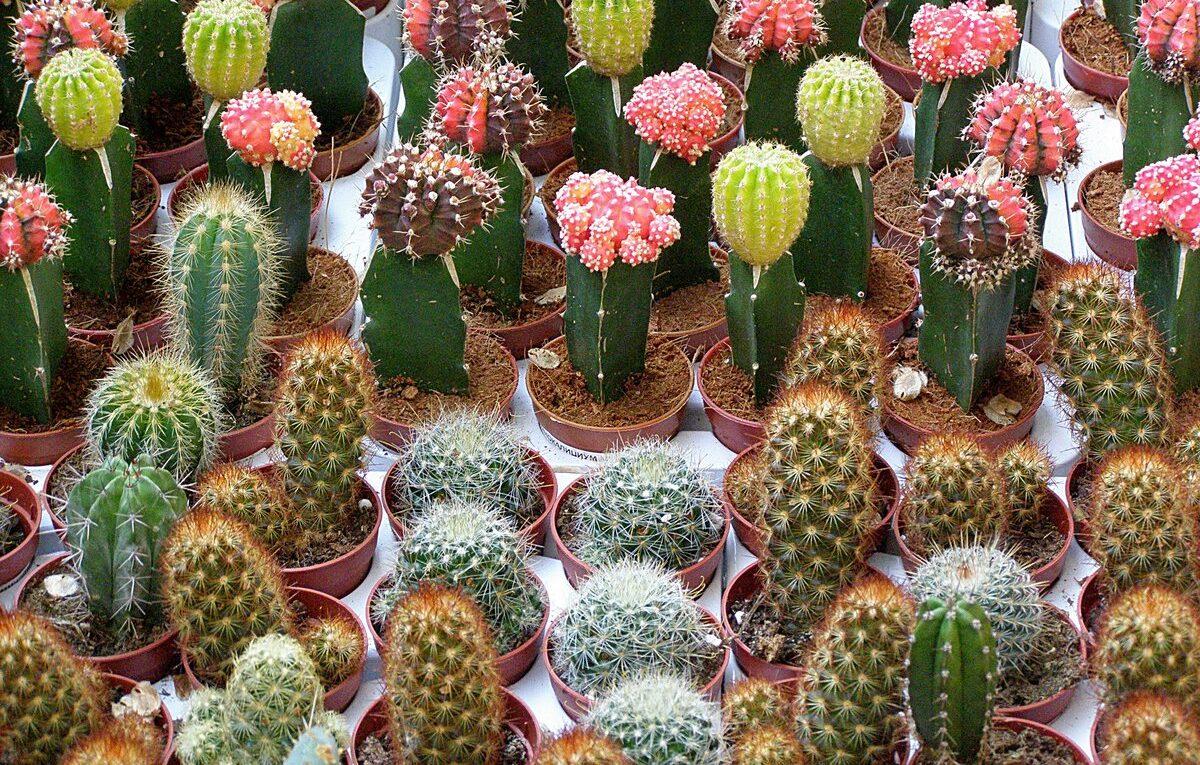 Ценность коллекции кактусов