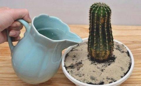 Какие же факторы нужно учитывать при поливе кактуса