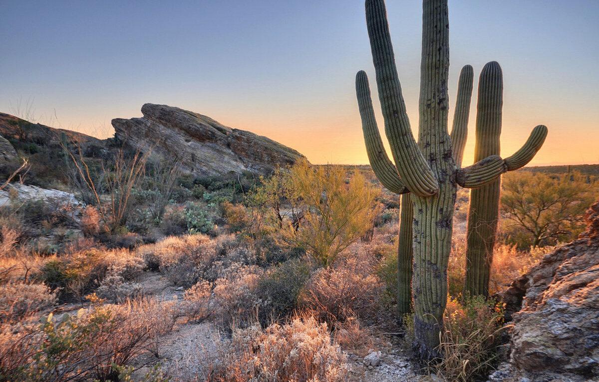 Карнегия - Величественный символ пустыни