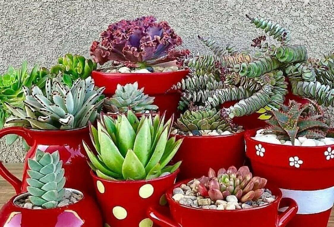 Во что сажать кактусы? Полезные рекомендации