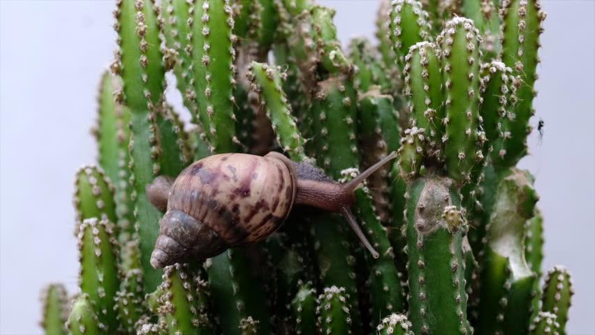 Насекомые-вредители кактусов. Слизняки и улитки