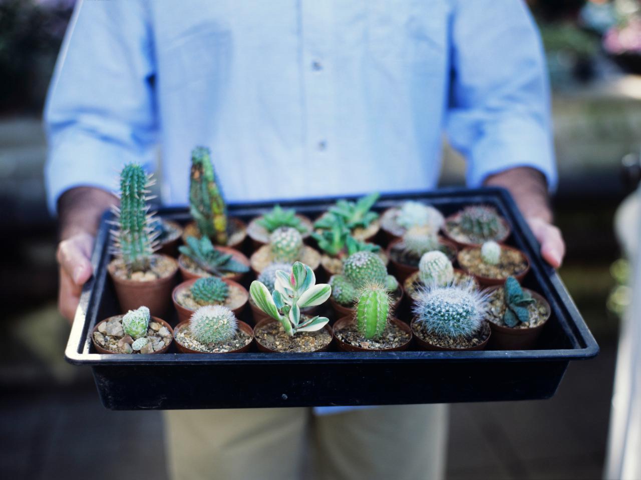 Перевозка кактуса