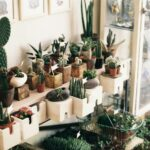 Варианты размещения кактусов в интерьере. Видео