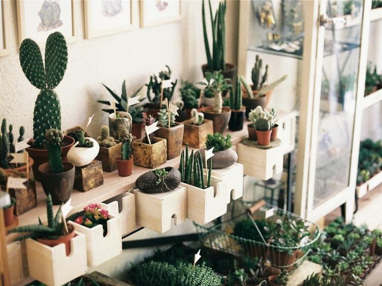 Варианты размещения кактусов в интерьере