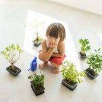 Какими должны быть комнатные растения для детской комнаты?