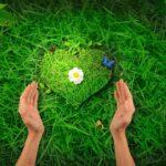 4 вида растений, которые влияют на ваше настроение