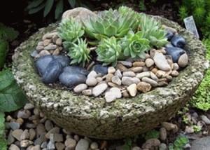 Делаем самостоятельно композиции из кактуов