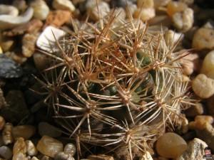 Естественные места обитания кактусов