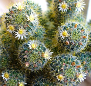 Факты о кактусах