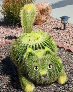 Химическая и механическая защита кактусов от животных