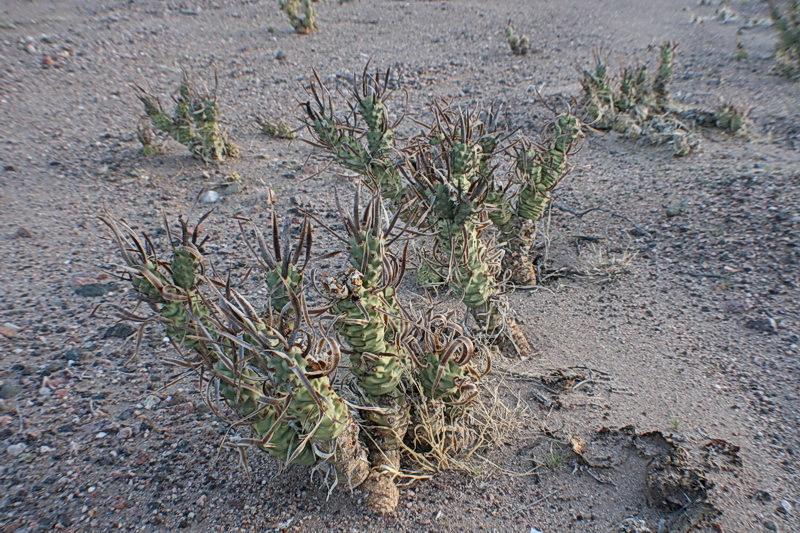 пересадка кактусов и уход за ними