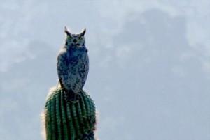 Кактусы Калифорнии