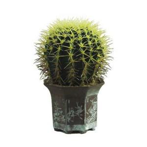 Общая информация о растении Опунция