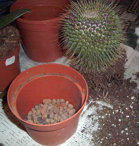 Какая земля нужна для кактуса в домашних условиях - Mi-k.ru