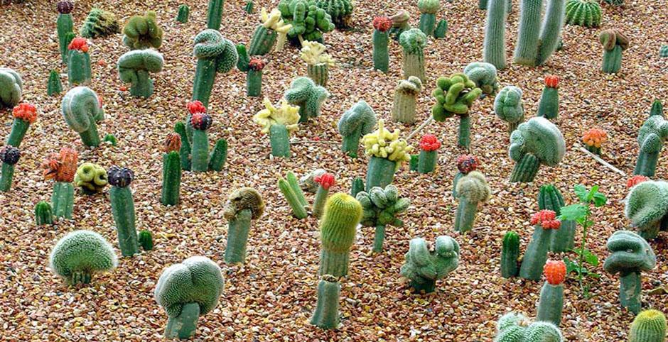 Горшок для кактуса сделать 7