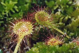 Существуют крайне редкие и запрещенные для торговли виды кактусов