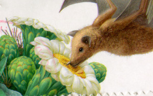 longnosed bat